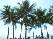 Honolulu Trip
