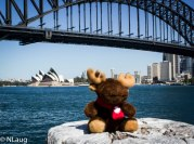 Monty with a view of Sydney Harbour Bridge & Opera House