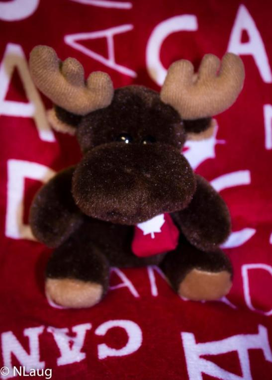 Meet Monty the Moose - I got him from one of my besties right before my EPIC trip to Oz! :)